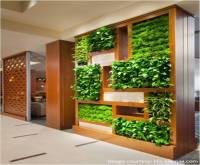 Vertical gardens in our homes and offices | Jaluk