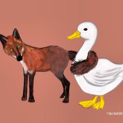 Fox&Duck
