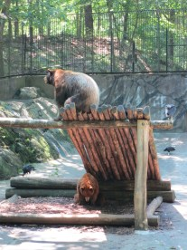 bears in captivity