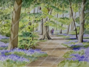 Bluebells, Nuffield Wood