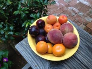 fruit_from_Farmer's Mkt