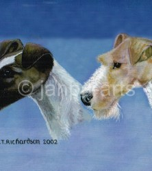 Two TERRIERS  SMOOTH  & ROUGH