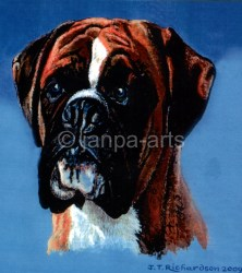 BOXER  Red & White a typical show breed