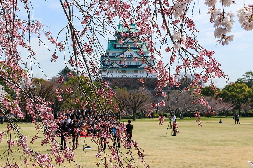 Falling Cherry Blossoms Wallpaper Cherry Blossom Reports 2018 Osaka Just Opened