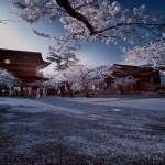 kamakura-ir-DSC_4614bsm