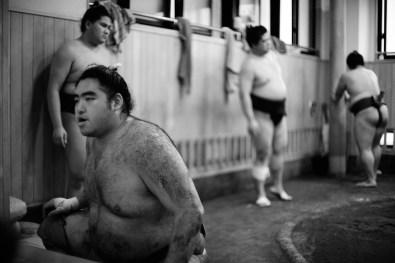 ALF_8555_sumo-small