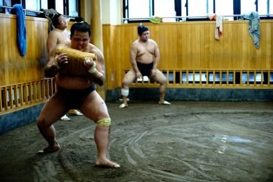ALF_8724_sumo-small