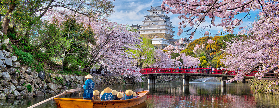 Pink Animal Wallpaper 187 2018 Japan Cherry Blossom Photography Tour Japan Photo Guide
