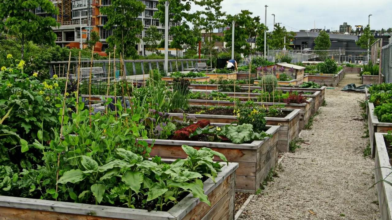 gustavo horta jardim : gustavo horta jardim:Hortas urbanas e a ressignificação da cidade – Jardim do Mundo