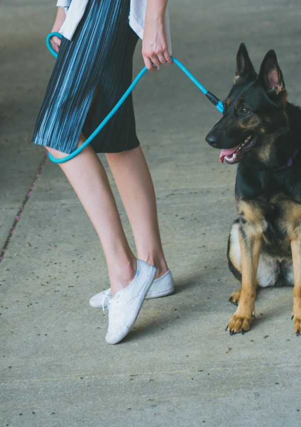 Roundup of the Most Fashionable Accessories for Your Dog