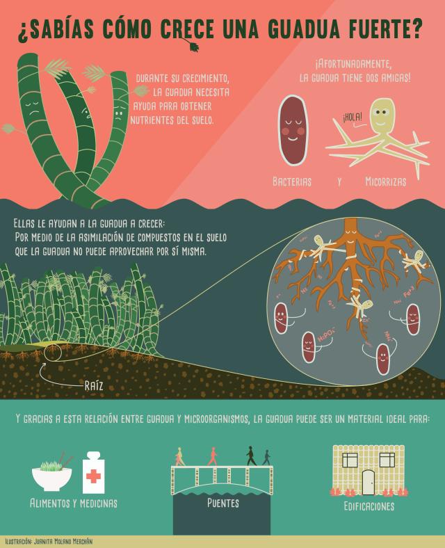 Infografía realizada por estudiantes javerianos.