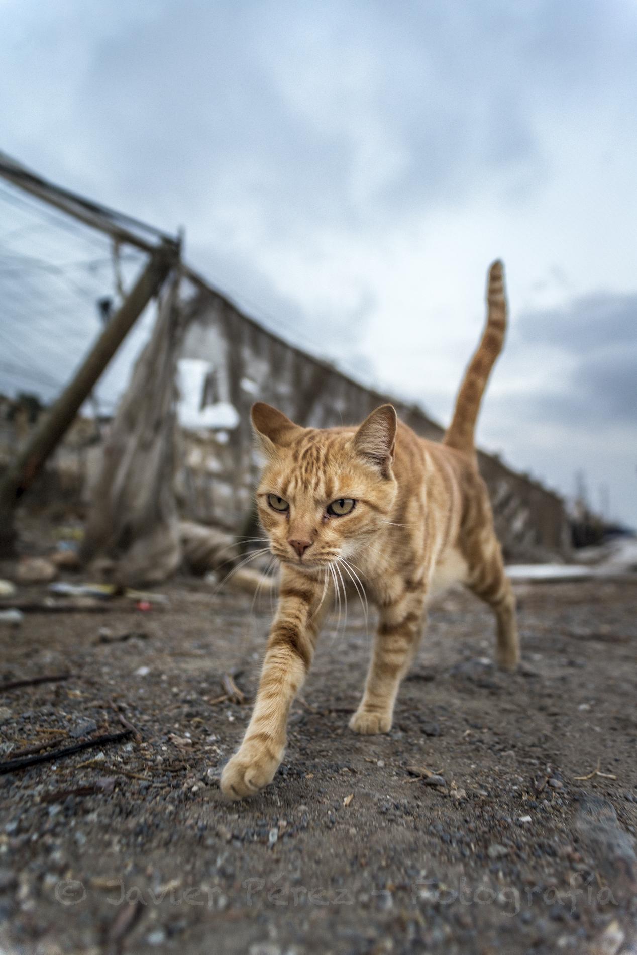 El gato del plástico