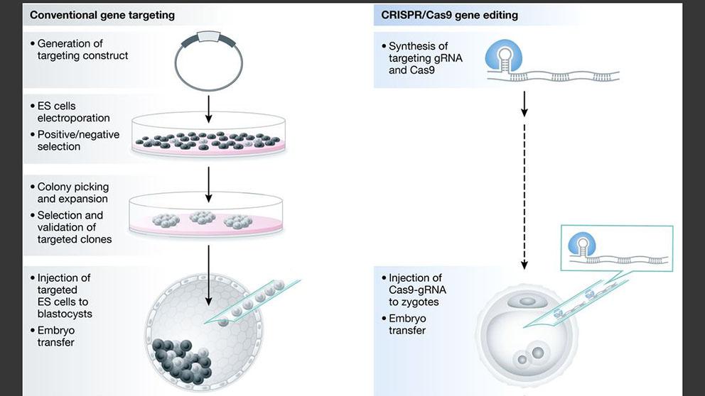 Of mice and CRISPR