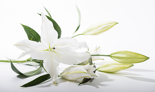 Funeral Celebrant Services by Jack Burns - funeral program background