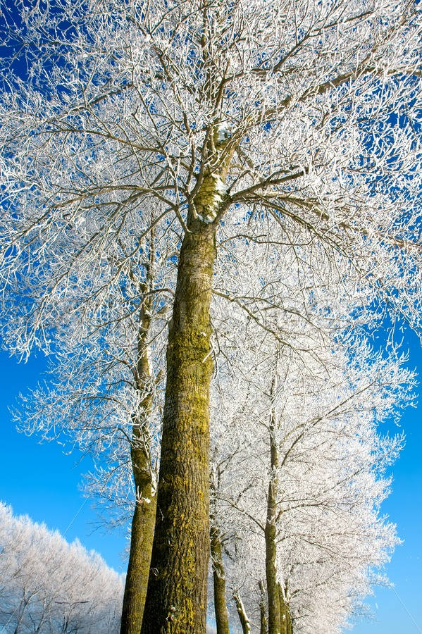 Frozen tree rows - Jan Brons Stock Images