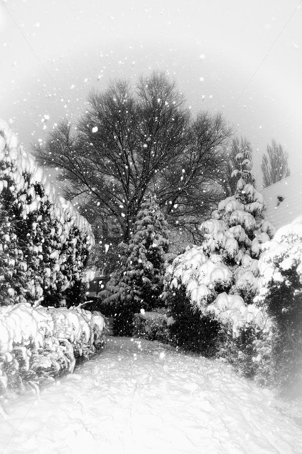 Heavy snowfall - Jan Brons Stock Images