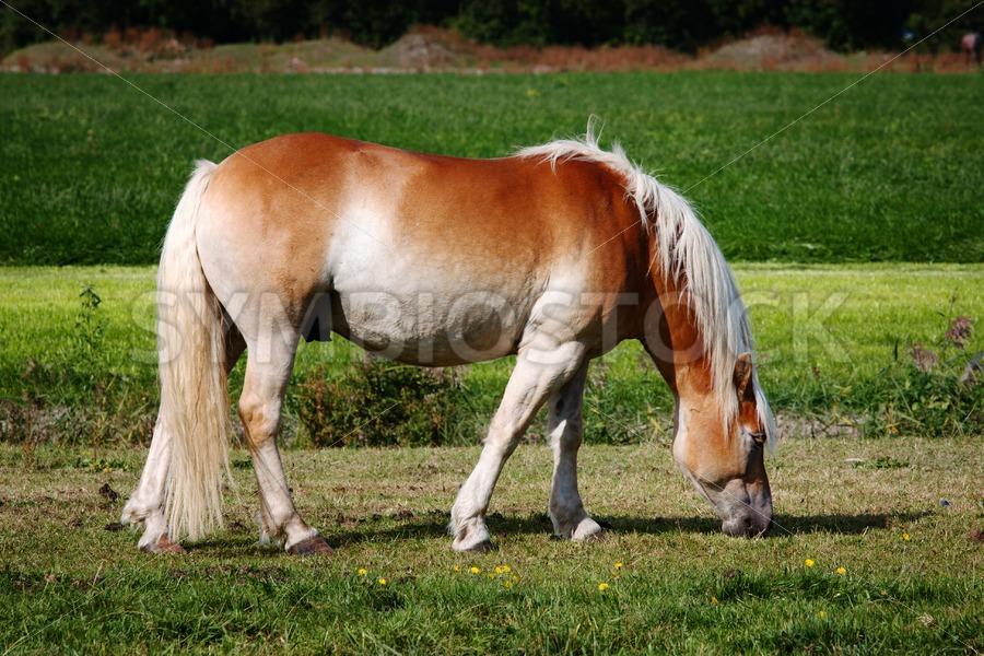 Horse portrait - Jan Brons Stock Images