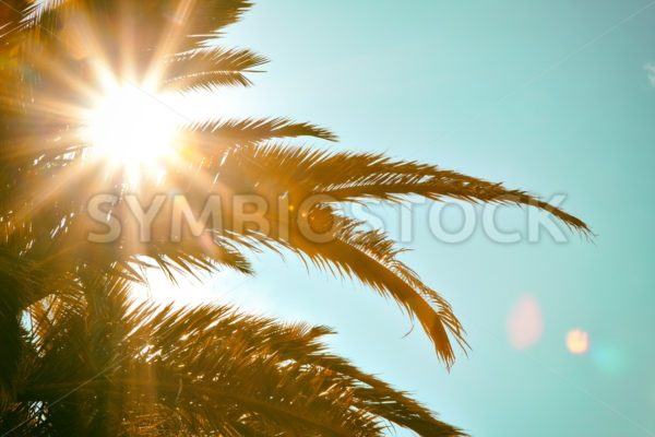 Tropical Sun Palm Tree - Jan Brons Stock Images