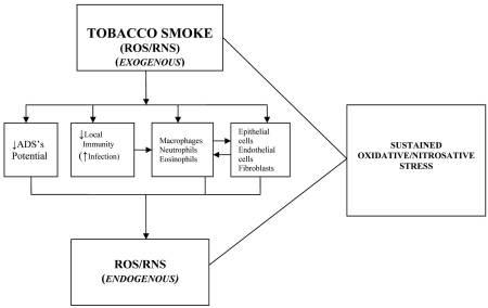 Chronic Obstructive Airways Disease Pathophysiology