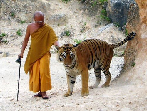 """Walking my tiger used to be in the """"should do"""" category. Now it's a """"must do"""" ... a pillar of my mental, creative, and cardiovascular health. OK -- I don't own a tiger -- but the walking part is true."""