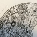 borboleta_03
