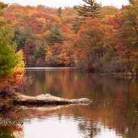 Finding peak fall foliage in New England