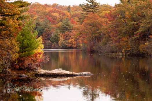 Birch Pond in Saugus MA reflecting peak fall color