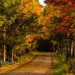 road through fall colored trees