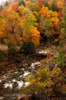 Foliage views near Florida MA above Black brook in the Mohawk trail state forest
