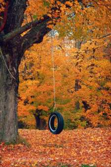 Folger-tire-swing-maine-fall-foliage