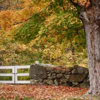 3 Easy steps to finding foliage locations
