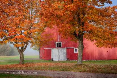 in sugar Hill a barn painted red with orange and yellow Maples in front of the white doors