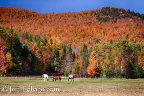 horses standing in a field below several hills covered in New England fall foliage colors