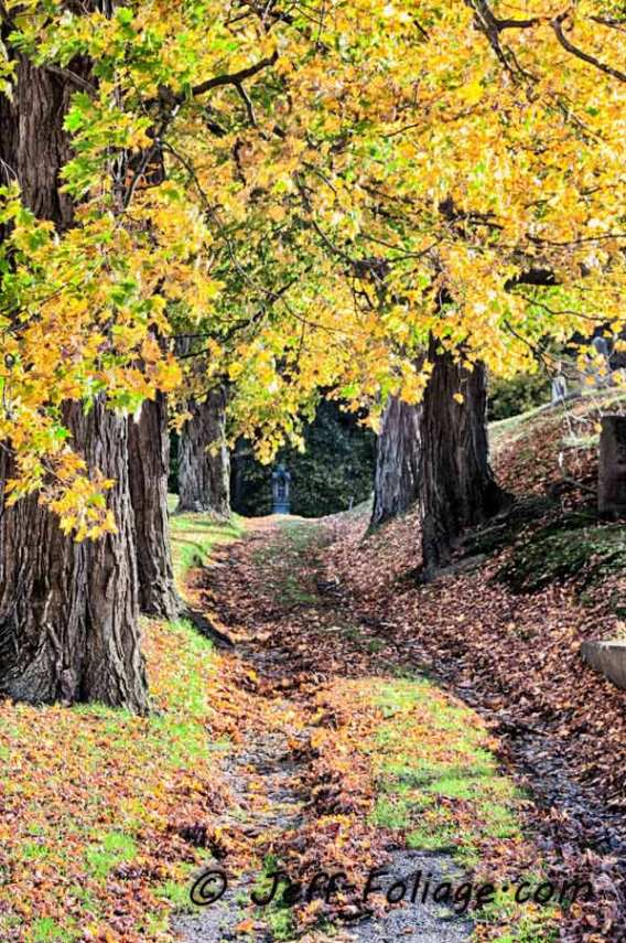 a trail winds its way through the fall foliage