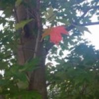 New England Foliage Report 16 Sept