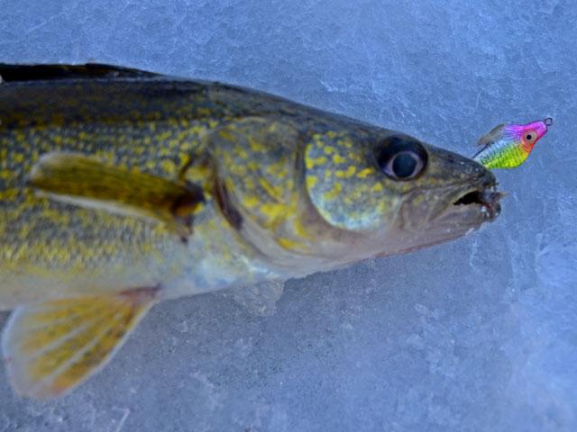 Ice Fishing Report Minnesota Fish Report February 2013