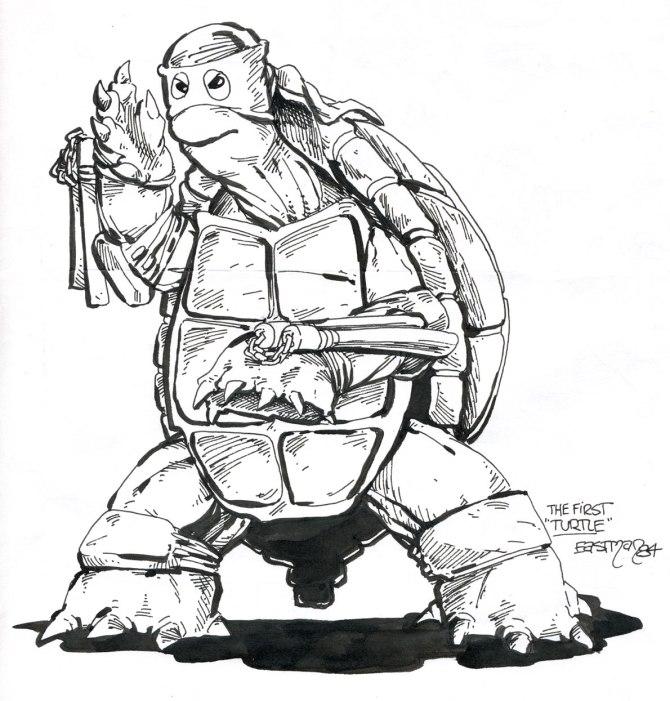 1st_turtle_sm
