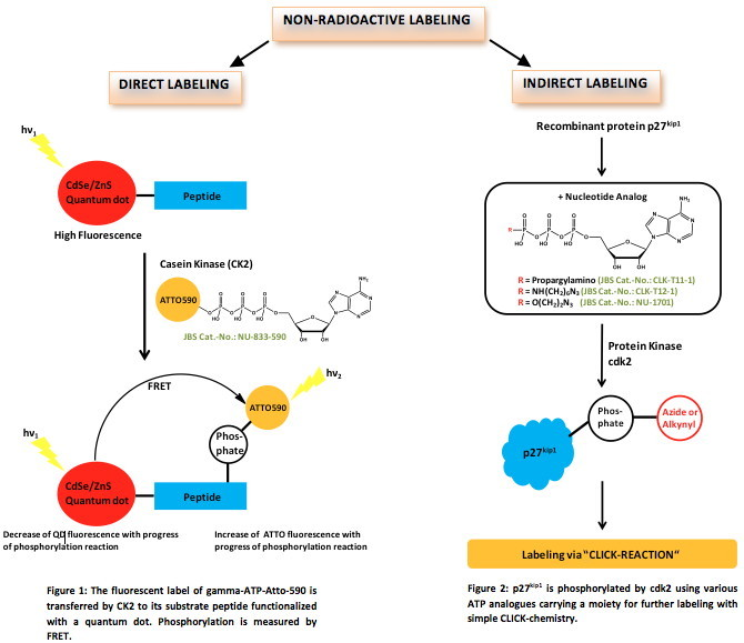 Jena Bioscience - Newsletter