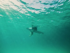 Surfer, sharks view