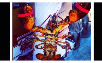 Gorgeous Maine Lobster is ready to be paired with a Pinot Gris