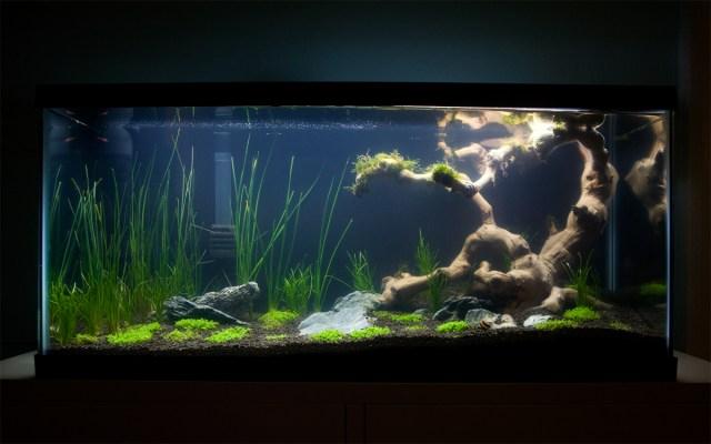 exosket's 30 gallon journal ? | AquaScaping World Forum