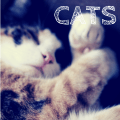 Reasons To Love Cats | #jbbb http://jennsblahblahblog.com #cats #pets