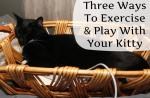 Three Ways To Exercise and Play With Your Kitty