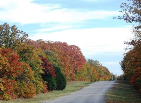 Beautiful fall trees along a road at Lake Thunderbird