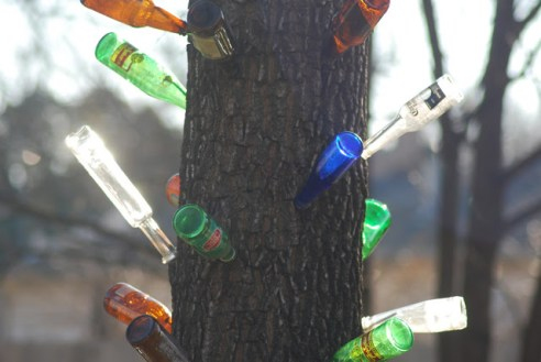 Glass Bottles Hung on Spikes and Nailed to a Tree Street Photography OKC