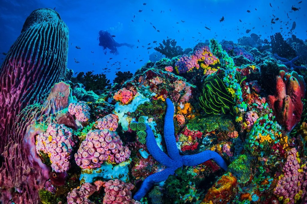This image of is a reef with diver in background