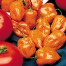 Heat-Peppers-110411