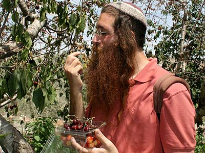 An Israeli visitor tasting cherries grown in Gush Etzion. Exports from this and all other Jewish settlements in Judea and Samaria have been boycotted in England since 2009.