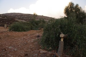 Destroyed Jewish Trees