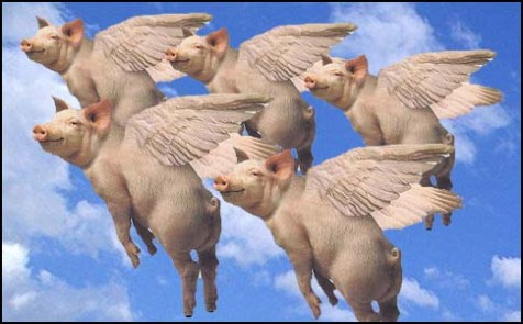 flying-pigs - Pigs can fly! - Weird and Extreme
